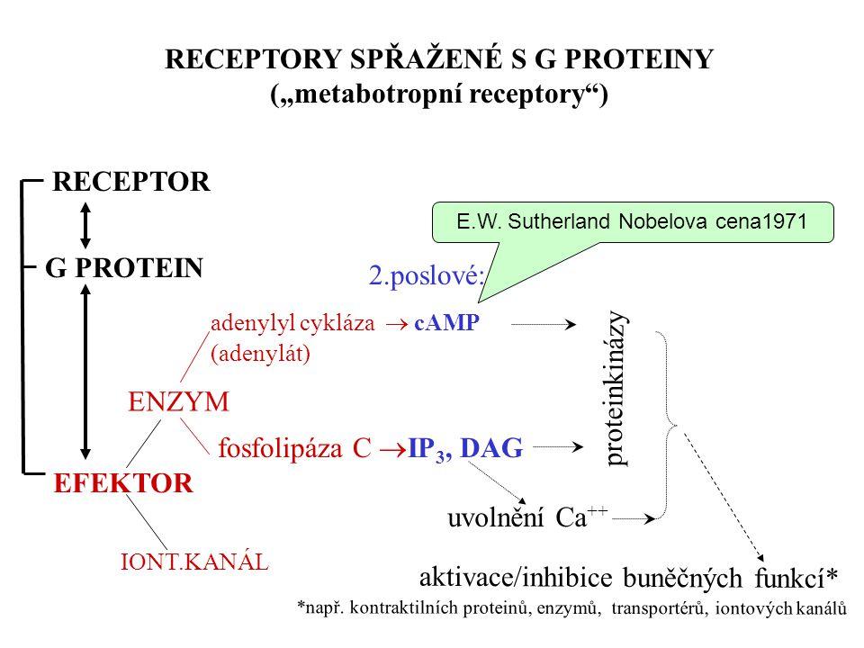 """ENZYM adenylyl cykláza  cAMP (adenylát) fosfolipáza C  IP 3, DAG proteinkinázy RECEPTORY SPŘAŽENÉ S G PROTEINY (""""metabotropní receptory ) G PROTEIN RECEPTOR uvolnění Ca ++ 2.poslové: aktivace/inhibice buněčných funkcí* *např."""