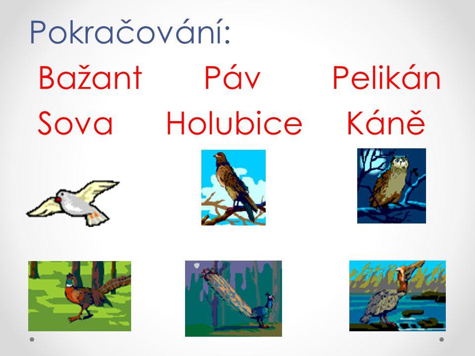 Pokračování: Bažant Páv Pelikán Sova Holubice Káně