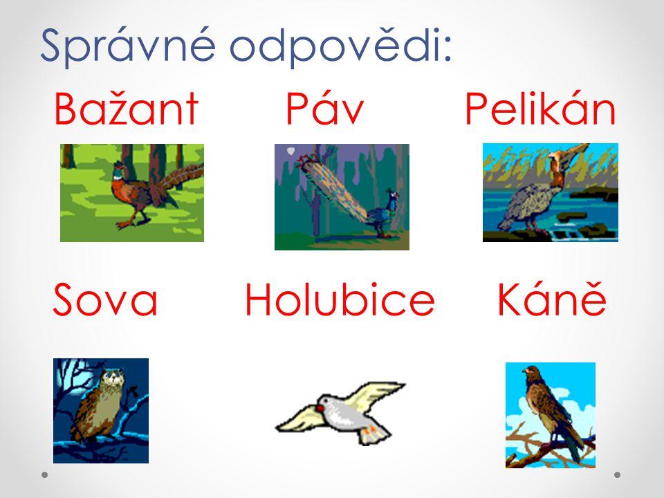 Správné odpovědi: Bažant Páv Pelikán Sova Holubice Káně