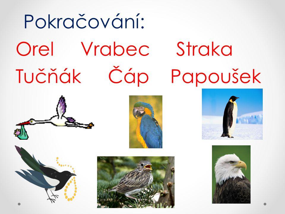 Správné odpovědi: Orel Vrabec Straka Tučňák Čáp Papoušek