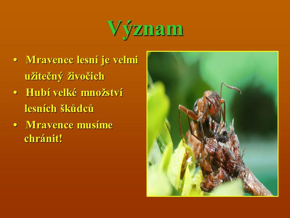 Význam Mravenec lesní je velmi Mravenec lesní je velmi užitečný živočich užitečný živočich Hubí velké množství Hubí velké množství lesních škůdců lesn