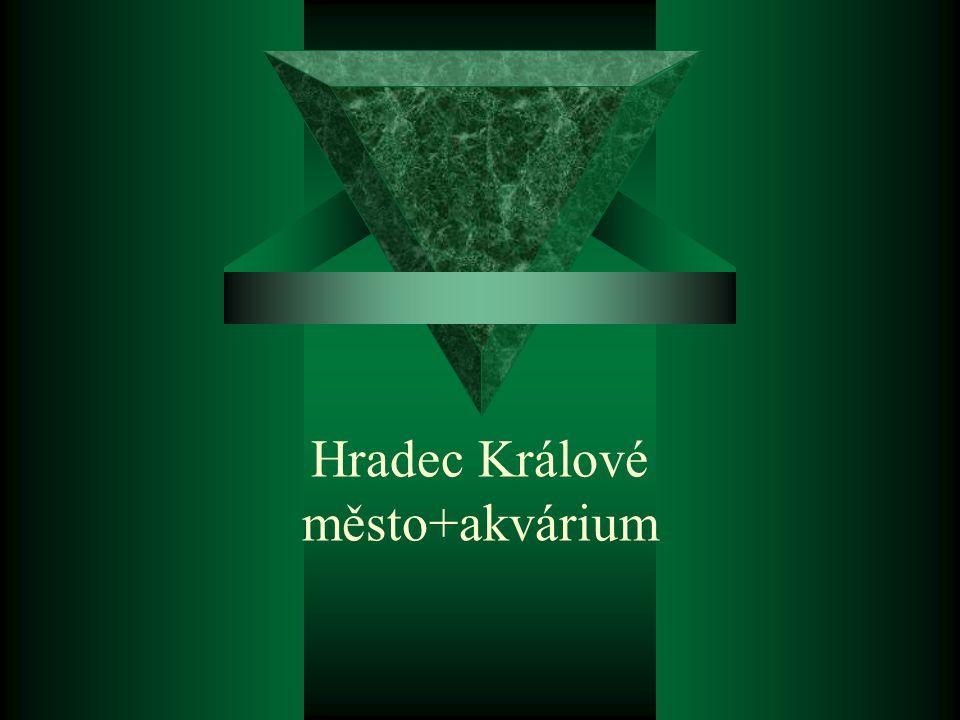 Hradec Králové město+akvárium