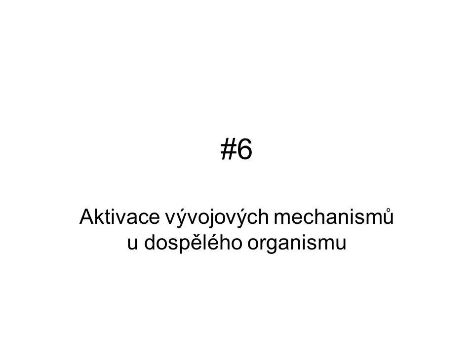 #6#6 Aktivace vývojových mechanismů u dospělého organismu