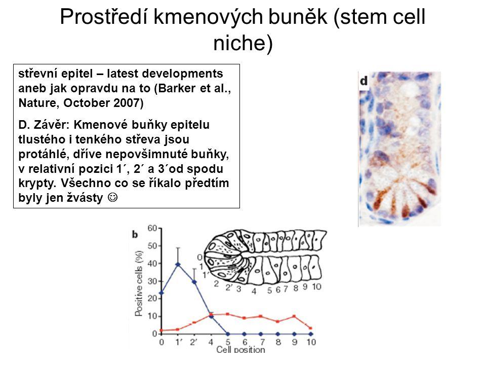 Prostředí kmenových buněk (stem cell niche) střevní epitel – latest developments aneb jak opravdu na to (Barker et al., Nature, October 2007) D. Závěr