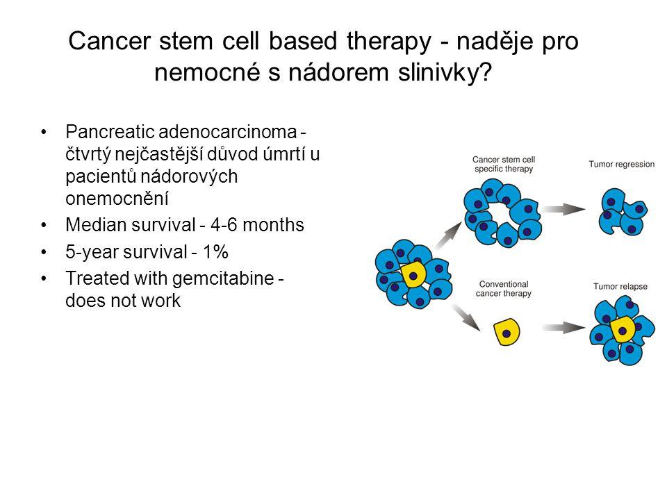 Cancer stem cell based therapy - naděje pro nemocné s nádorem slinivky? Pancreatic adenocarcinoma - čtvrtý nejčastější důvod úmrtí u pacientů nádorový