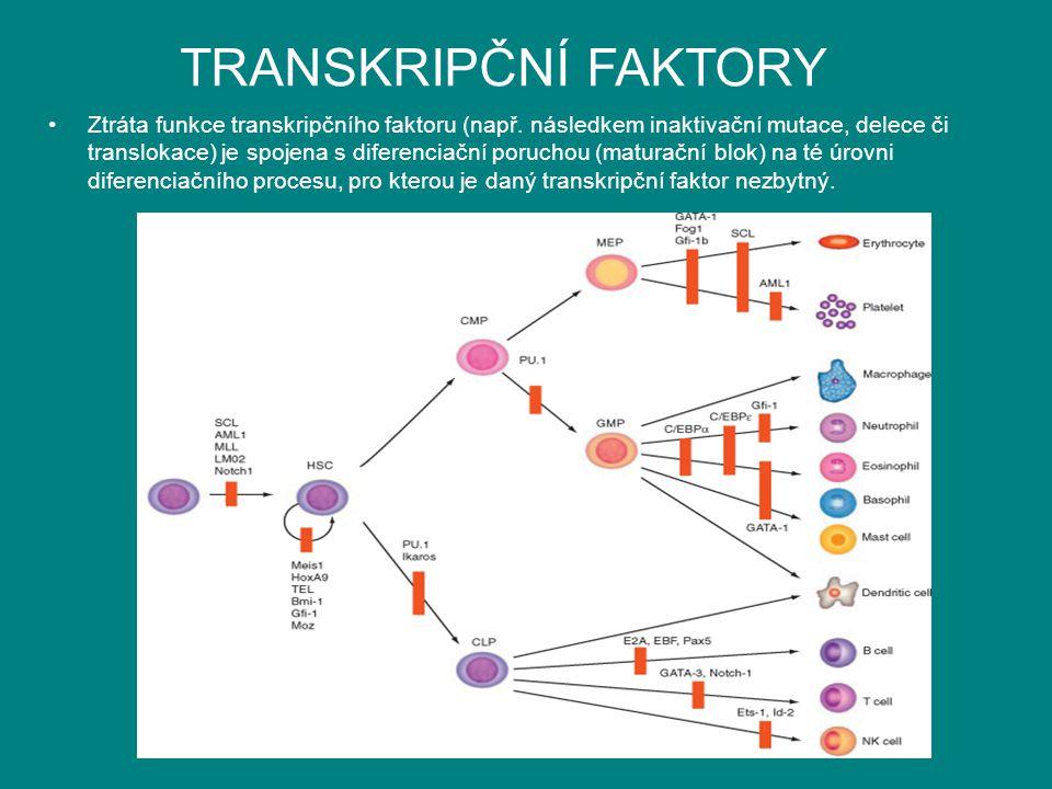 TRANSKRIPČNÍ FAKTORY Ztráta funkce transkripčního faktoru (např. následkem inaktivační mutace, delece či translokace) je spojena s diferenciační poruc