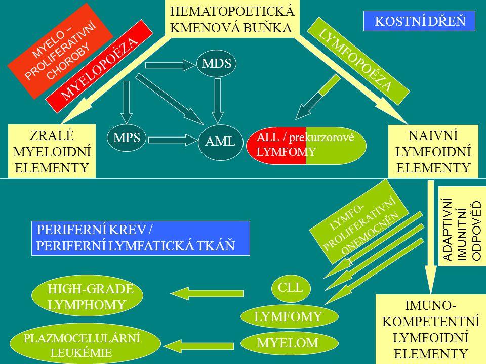 KOSTNÍ DŘEŇ IMUNO- KOMPETENTNÍ LYMFOIDNÍ ELEMENTY LYMFOPOÉZA ZRALÉ MYELOIDNÍ ELEMENTY HEMATOPOETICKÁ MYELOPOÉZA NAIVNÍ LYMFOIDNÍ ELEMENTY MDS MPS AML