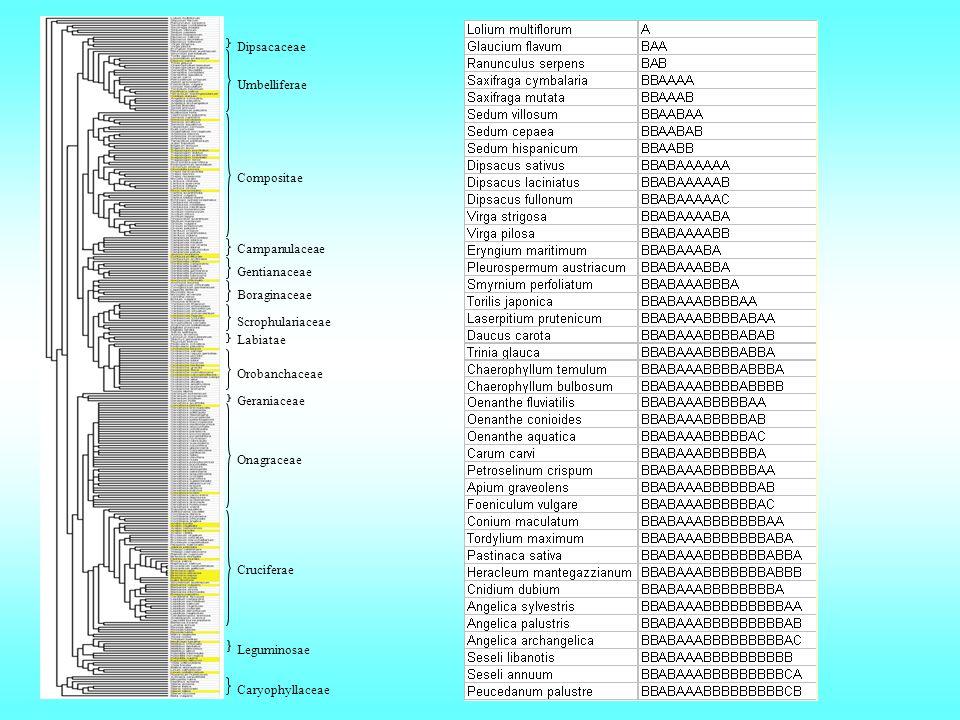 Umbelliferae Compositae Campanulaceae Gentianaceae Boraginaceae Scrophulariaceae Labiatae Orobanchaceae Geraniaceae Onagraceae Cruciferae Caryophyllac