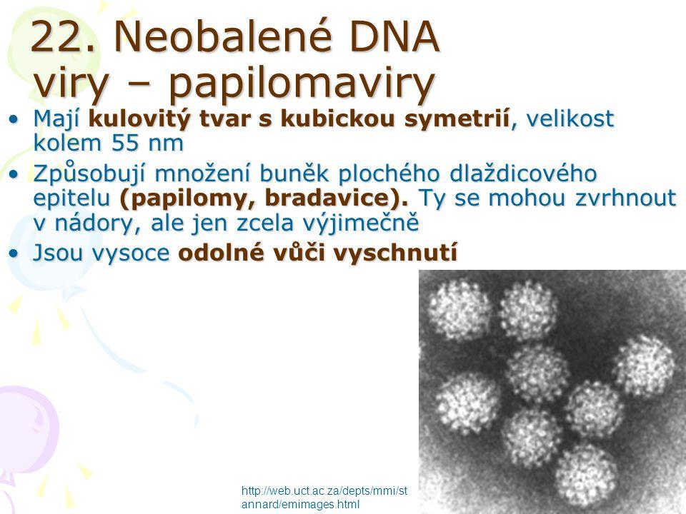 22. Neobalené DNA viry – papilomaviry Mají kulovitý tvar s kubickou symetrií, velikost kolem 55 nmMají kulovitý tvar s kubickou symetrií, velikost kol