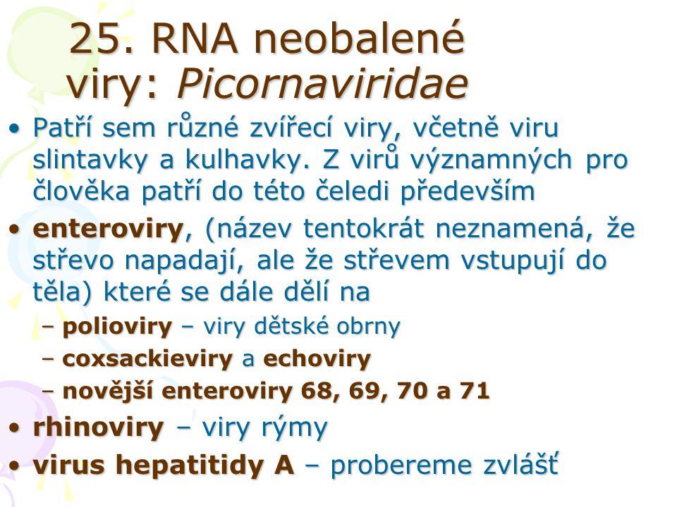 25. RNA neobalené viry: Picornaviridae Patří sem různé zvířecí viry, včetně viru slintavky a kulhavky. Z virů významných pro člověka patří do této čel