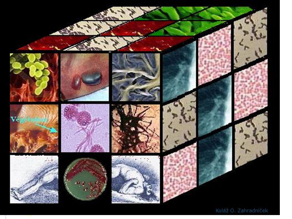 Virus Rift Valley http://web.uct.ac.za/depts/mmi/stannard/emimages.html