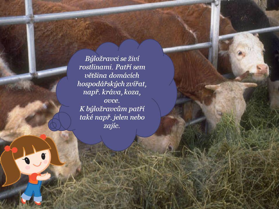 Býložravci se živí rostlinami. Patří sem většina domácích hospodářských zvířat, např. kráva, koza, ovce. K býložravcům patří také např. jelen nebo zaj