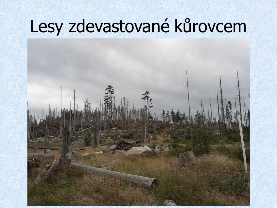 Lesy zdevastované kůrovcem