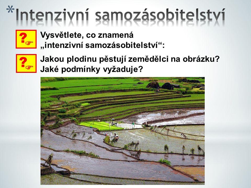 """ ? Vysvětlete, co znamená """"intenzivní samozásobitelství"""":  ? Jakou plodinu pěstují zemědělci na obrázku? Jaké podmínky vyžaduje?"""