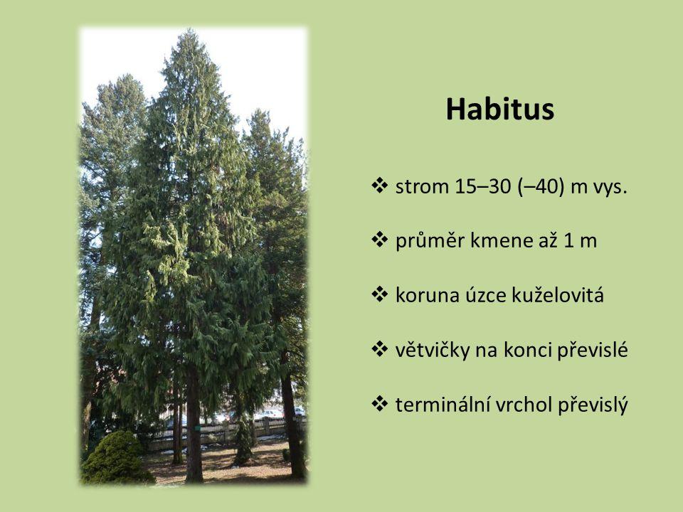 Habitus  strom 15–30 (–40) m vys.  průměr kmene až 1 m  koruna úzce kuželovitá  větvičky na konci převislé  terminální vrchol převislý
