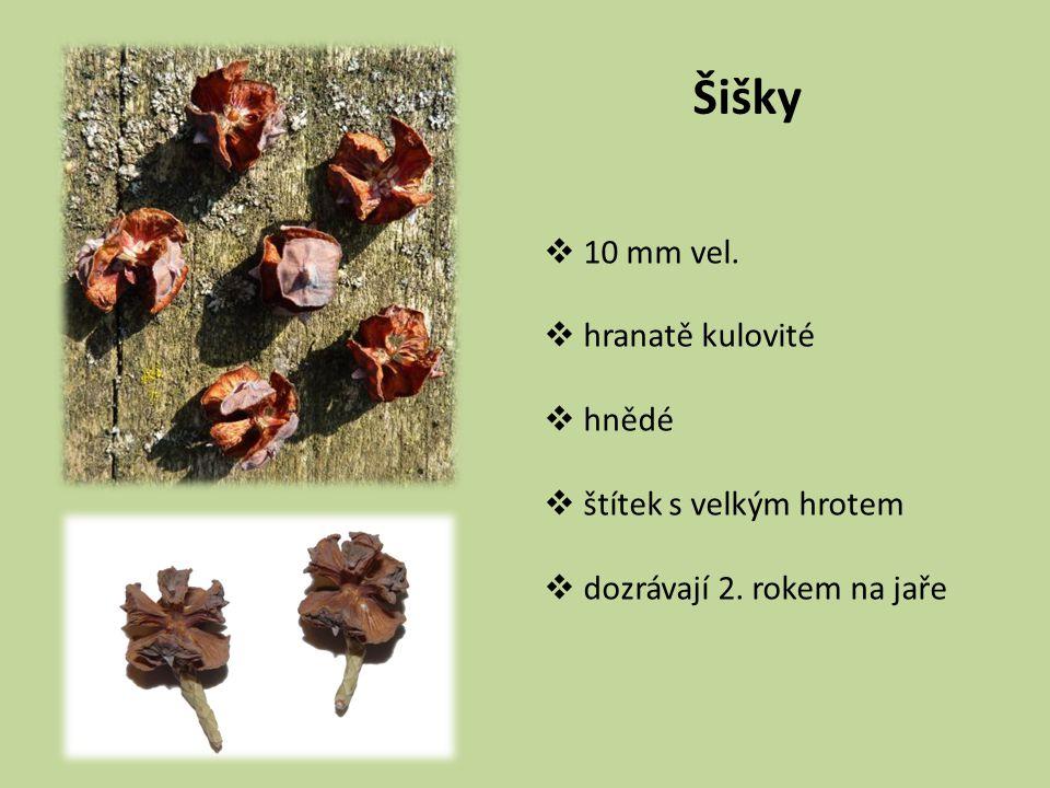 Šišky  10 mm vel.  hranatě kulovité  hnědé  štítek s velkým hrotem  dozrávají 2. rokem na jaře