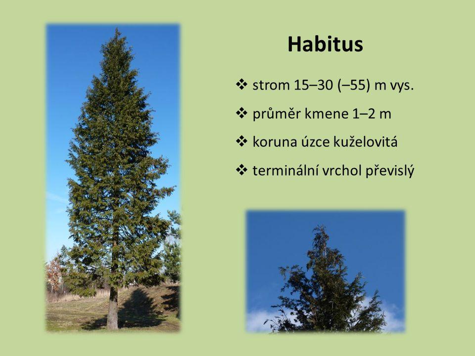 Habitus  strom 15–30 (–55) m vys.  průměr kmene 1–2 m  koruna úzce kuželovitá  terminální vrchol převislý