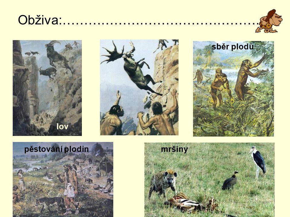 Obživa:…………………………………………. sběr plodů pěstování plodin mršiny lov