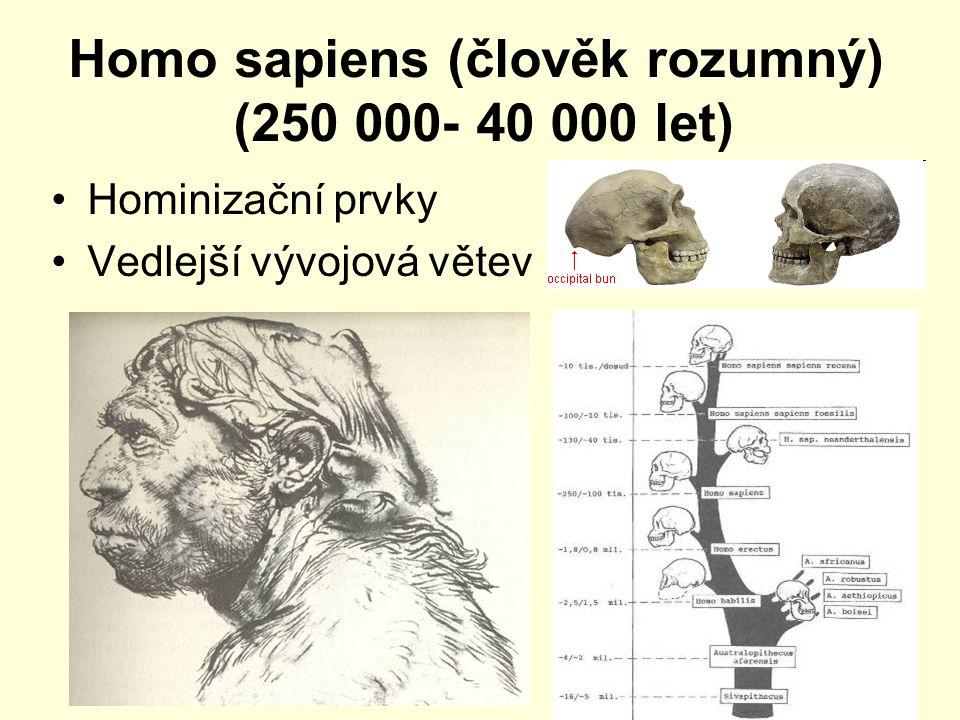 Homo sapiens (člověk rozumný) (250 000- 40 000 let) Hominizační prvky Vedlejší vývojová větev