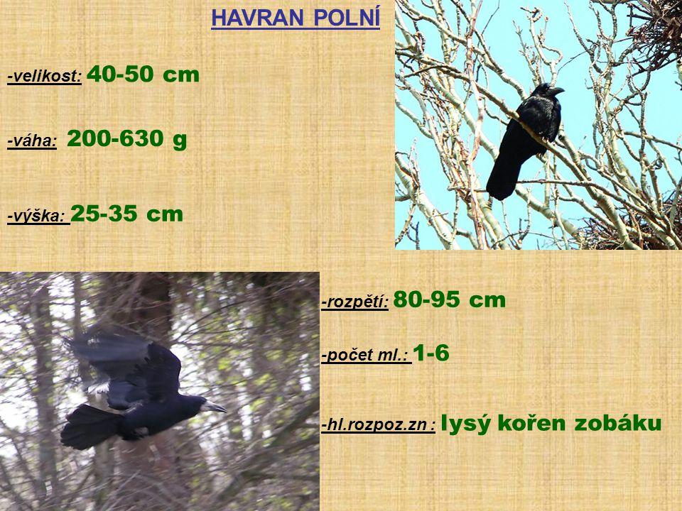 HAVRAN POLNÍ -velikost: 40-50 cm -váha: 200-630 g -výška: 25-35 cm -rozpětí: 80-95 cm -počet ml.: 1-6 -hl.rozpoz.zn : lysý kořen zobáku