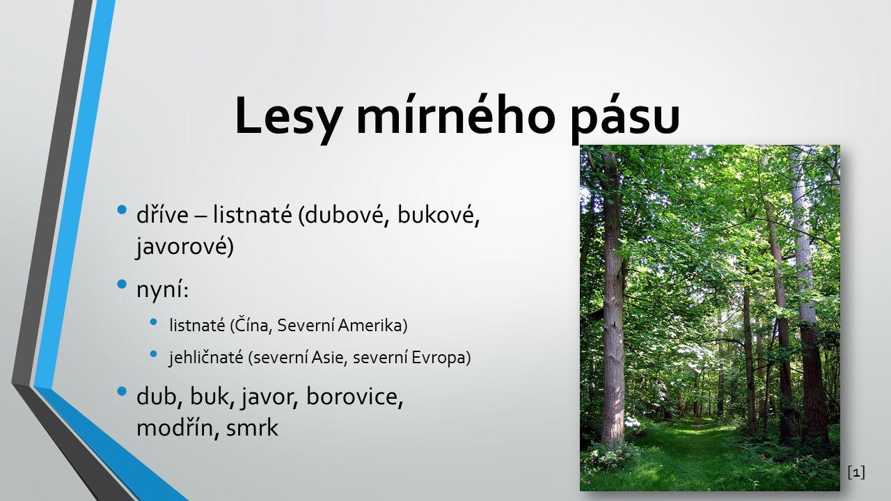 Lesy mírného pásu dříve – listnaté (dubové, bukové, javorové) nyní: listnaté (Čína, Severní Amerika) jehličnaté (severní Asie, severní Evropa) dub, bu