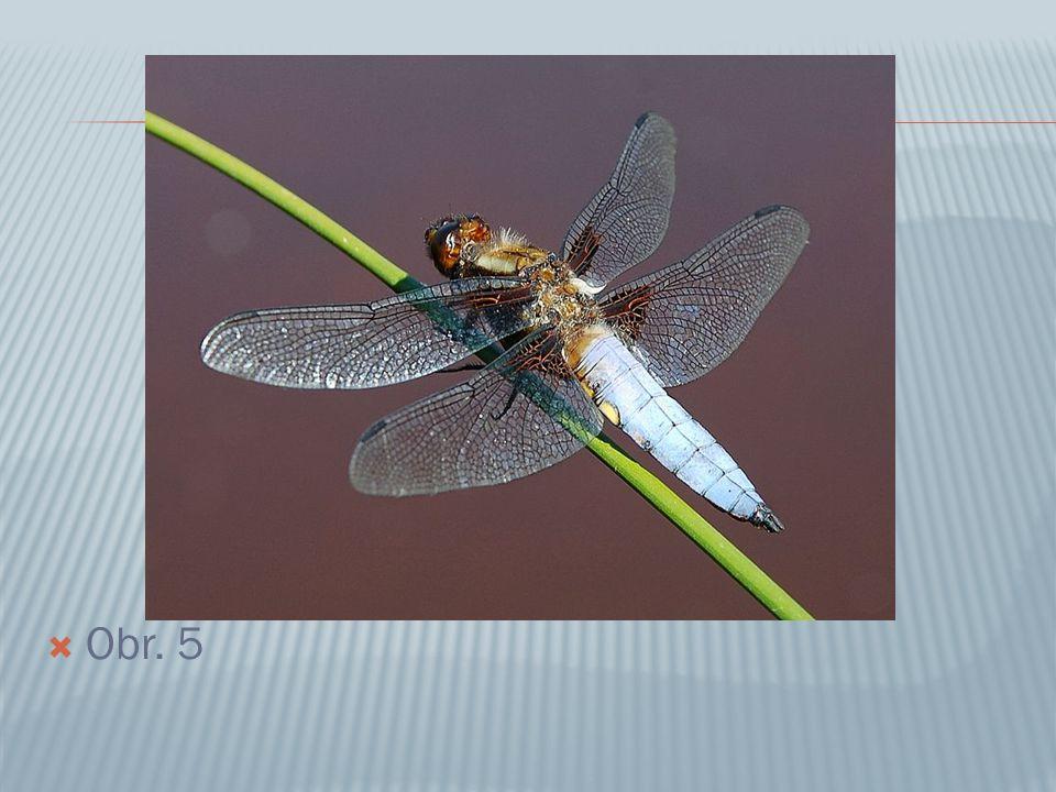  Obr.1: Bekyně mniška - motýli  Obr. 2: Roháč obecný - brouci  Obr.
