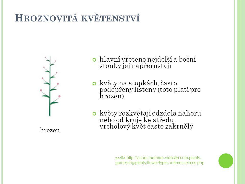 H ROZNOVITÁ KVĚTENSTVÍ hlavní vřeteno nejdelší a boční stonky jej nepřerůstají květy na stopkách, často podepřeny listeny (toto platí pro hrozen) květ