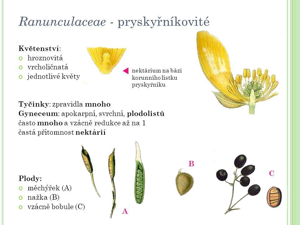 Ranunculaceae - pryskyřníkovité Květenství : hroznovitá vrcholičnatá jednotlivé květy Tyčinky : zpravidla mnoho Gyneceum : apokarpní, svrchní, plodoli