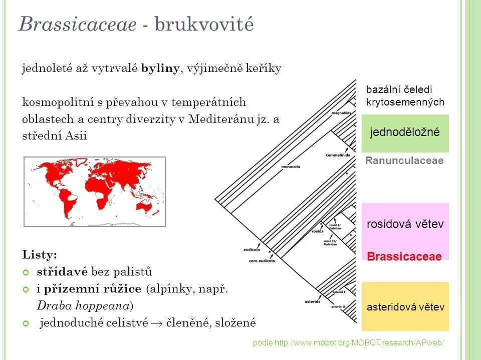 podle http://www.mobot.org/MOBOT/research/APweb/ Brassicaceae - brukvovité jednoděložné bazální čeledi krytosemenných rosidová větev asteridová větev
