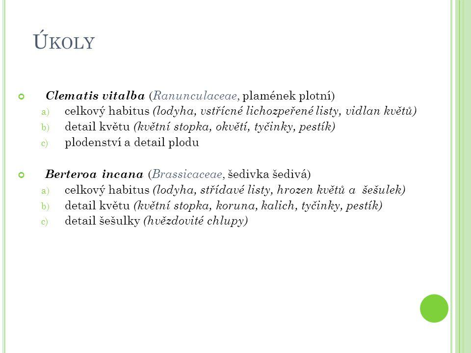 Ú KOLY Clematis vitalba ( Ranunculaceae, plamének plotní) a) celkový habitus (lodyha, vstřícné lichozpeřené listy, vidlan květů) b) detail květu (květ