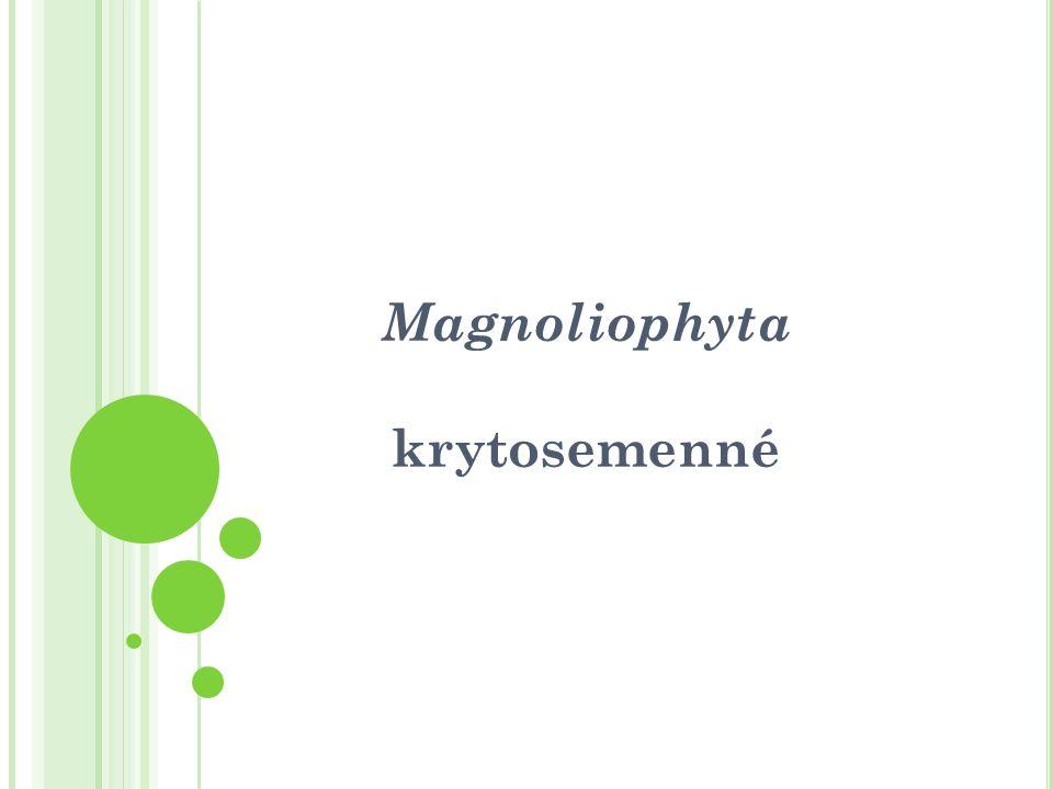 Magnoliophyta - krytosemenné stáří hlavních skupin cca 120 mil.