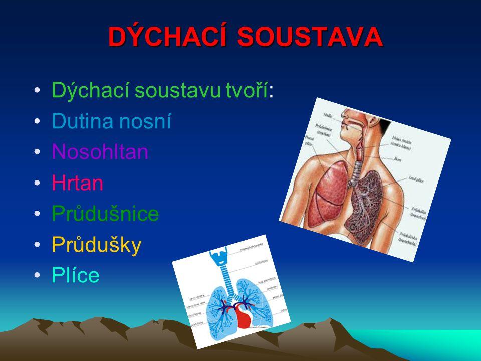 DÝCHACÍ SOUSTAVA Dýchací soustavu tvoří: Dutina nosní Nosohltan Hrtan Průdušnice Průdušky Plíce