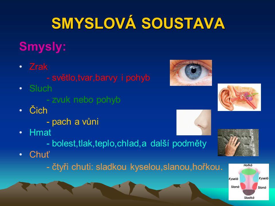 SMYSLOVÁ SOUSTAVA Smysly: Zrak - světlo,tvar,barvy i pohyb Sluch - zvuk nebo pohyb Čich - pach a vůni Hmat - bolest,tlak,teplo,chlad,a další podměty C