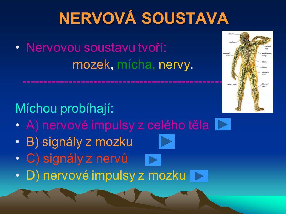 NERVOVÁ SOUSTAVA Nervovou soustavu tvoří: mozek, mícha, nervy. --------------------------------------------------------- Míchou probíhají: A) nervové