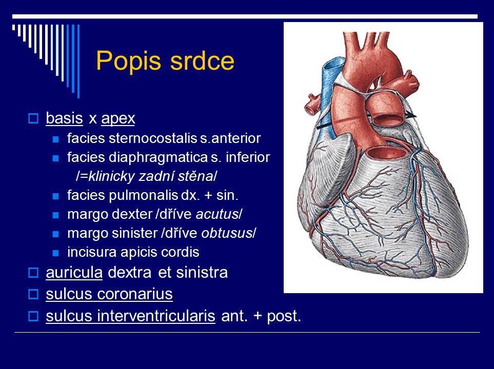 Stavba srdce  endocardium = tunica intima  myocardium = tunica media pracovní myokard excitomotorický aparát (EA) srdeční skelet  pericardium