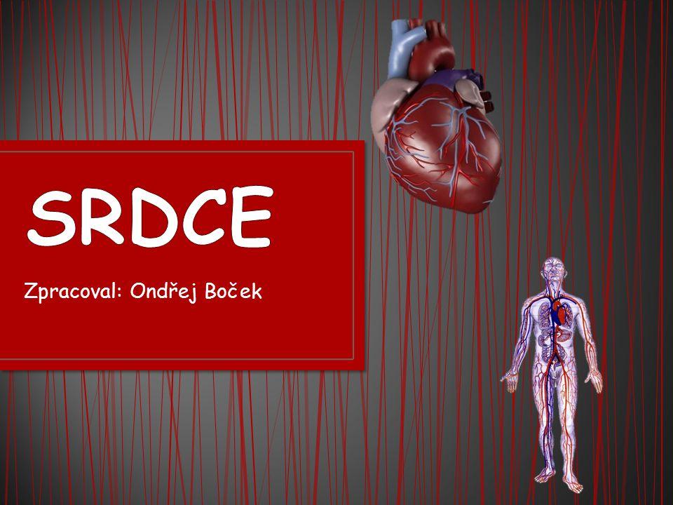 U savců je srdce uloženo v středohrudí, tedy v hrudníku mezi plícemi, hrudní kostí a bránicí.