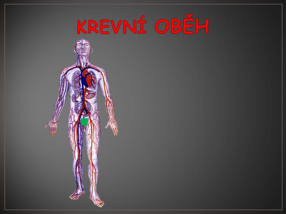 V krvi jsou: Bílé krvinkyČervené krvinky Krevní destičky