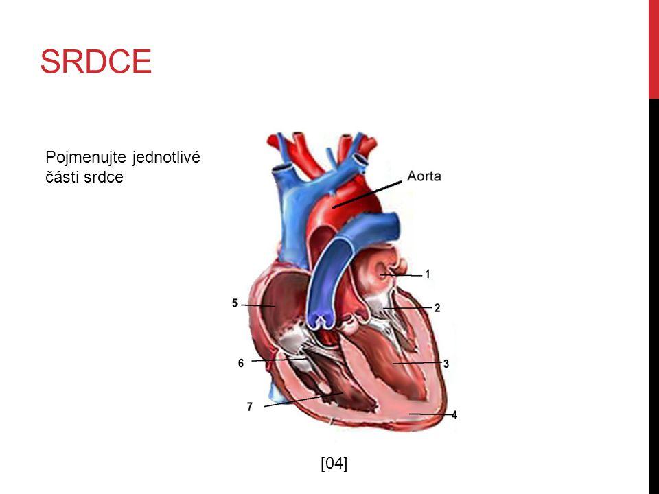 SRDCE [04] Pojmenujte jednotlivé části srdce
