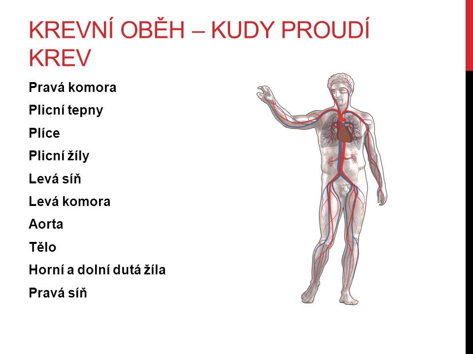 KREVNÍ OBĚH – KUDY PROUDÍ KREV Pravá komora Plicní tepny Plíce Plicní žíly Levá síň Levá komora Aorta Tělo Horní a dolní dutá žíla Pravá síň