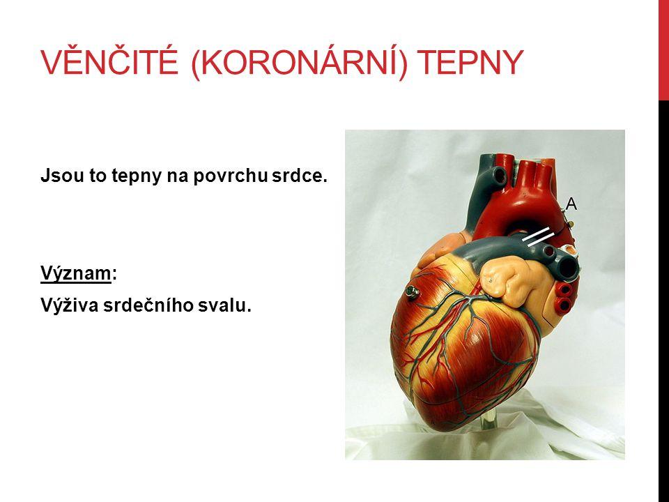 VĚNČITÉ (KORONÁRNÍ) TEPNY Jsou to tepny na povrchu srdce. Význam: Výživa srdečního svalu.
