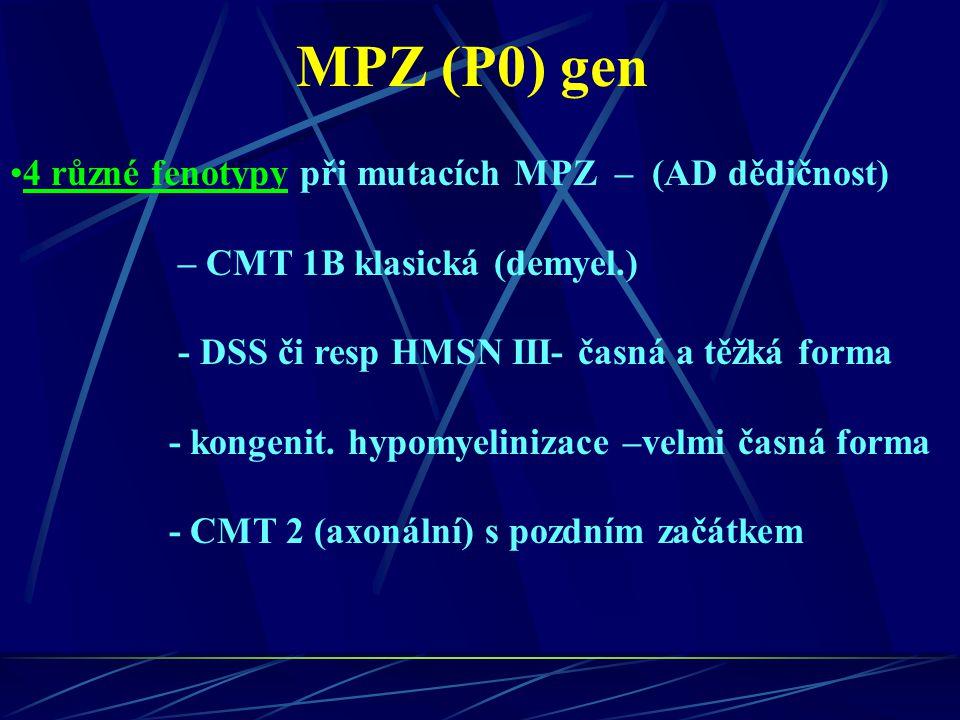 MPZ (P0) gen 4 různé fenotypy při mutacích MPZ – (AD dědičnost) – CMT 1B klasická (demyel.) - DSS či resp HMSN III- časná a těžká forma - kongenit. hy