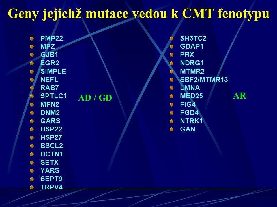 PMP22 MPZ GJB1 EGR2 SIMPLE NEFL RAB7 SPTLC1 MFN2 DNM2 GARS HSP22 HSP27 BSCL2 DCTN1 SETX YARS SEPT9 TRPV4 SH3TC2 GDAP1 PRX NDRG1 MTMR2 SBF2/MTMR13 LMNA