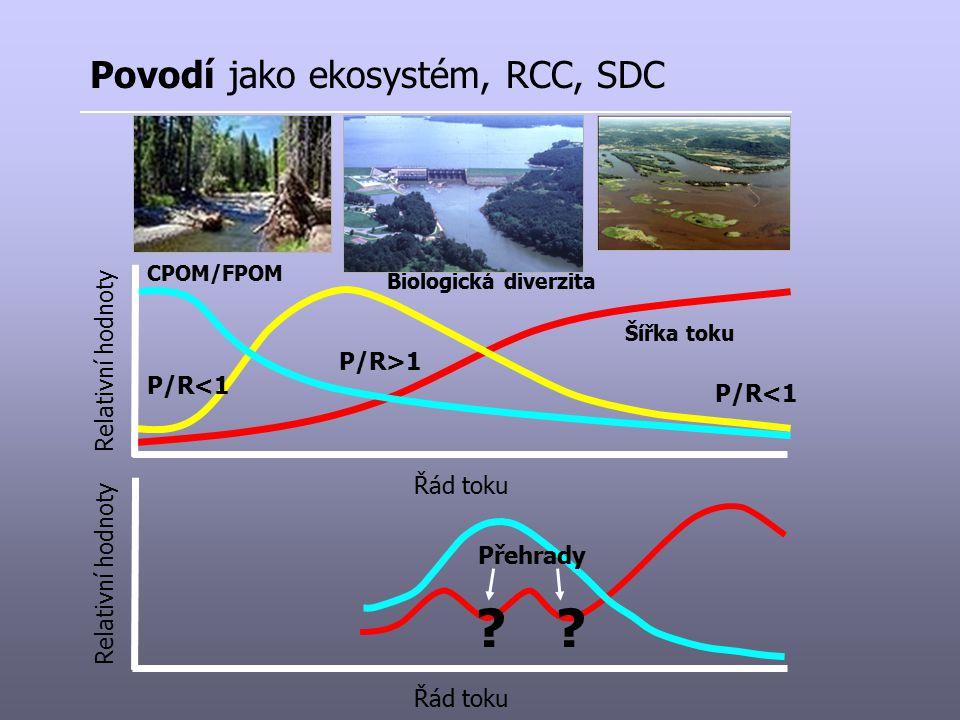 Povodí jako ekosystém, RCC, SDC Řád toku Relativní hodnoty Šířka toku Biologická diverzita CPOM/FPOM P/R<1 P/R>1 P/R<1 Řád toku Relativní hodnoty Přeh