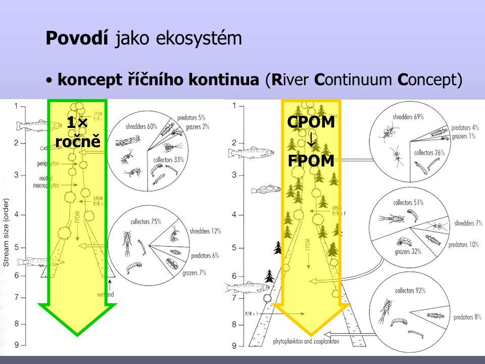 Povodí jako ekosystém koncept říčního kontinua (River Continuum Concept) CPOM  FPOM 1× ročně
