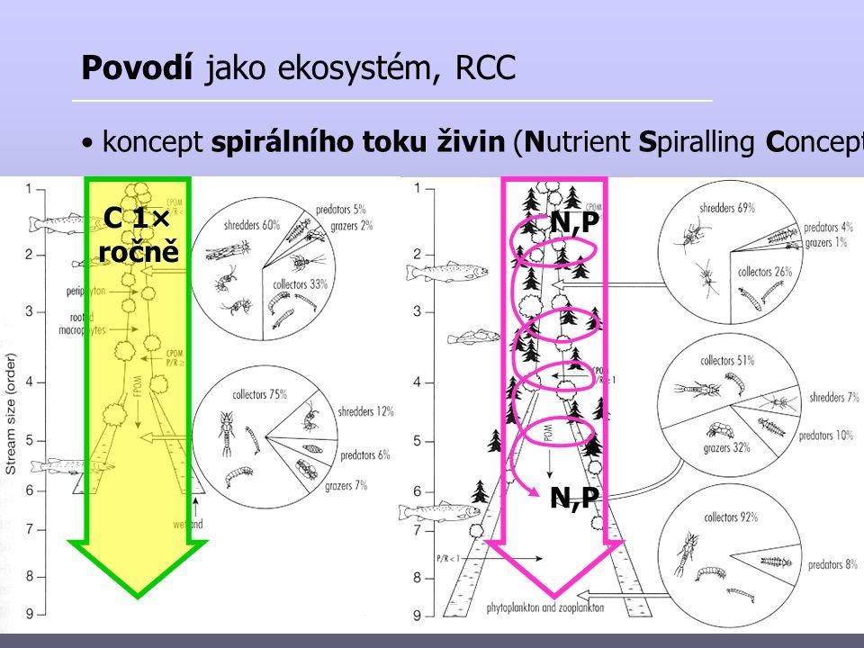 Povodí jako ekosystém, RCC koncept spirálního toku živin (Nutrient Spiralling Concept) C 1× ročně N,P