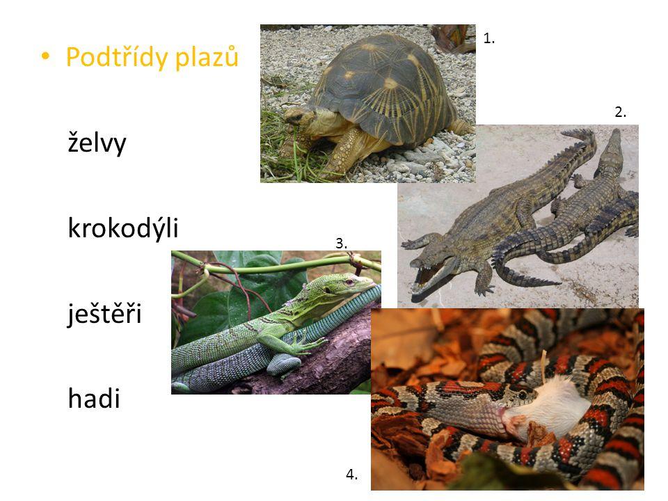 Podtřídy plazů želvy krokodýli ještěři hadi 1. 2. 3. 4.