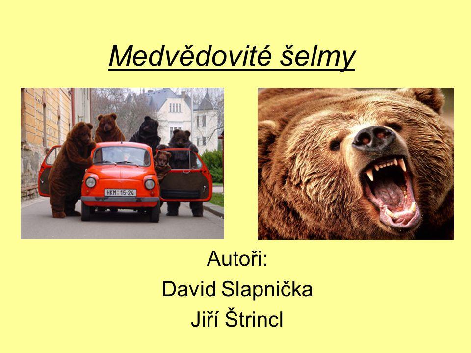 Medvědovité šelmy Autoři: David Slapnička Jiří Štrincl