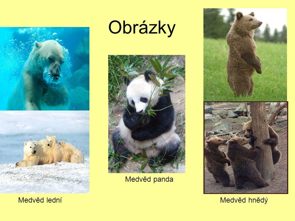 Obrázky Medvěd hnědýMedvěd lední Medvěd panda