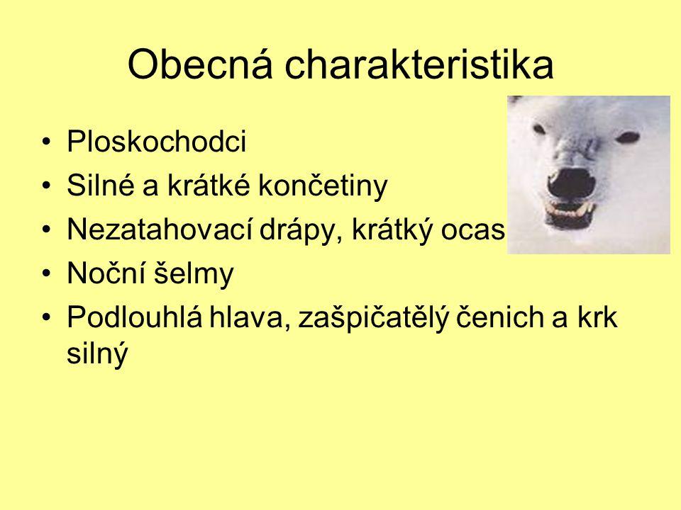 Obecná charakteristika Samotáři Přezimují v brlozích (hibernace) Mohutná kostra Žijí na všech kontinentech kromě Austrálie Samice má 1-6 mláďat, která jsou slepá
