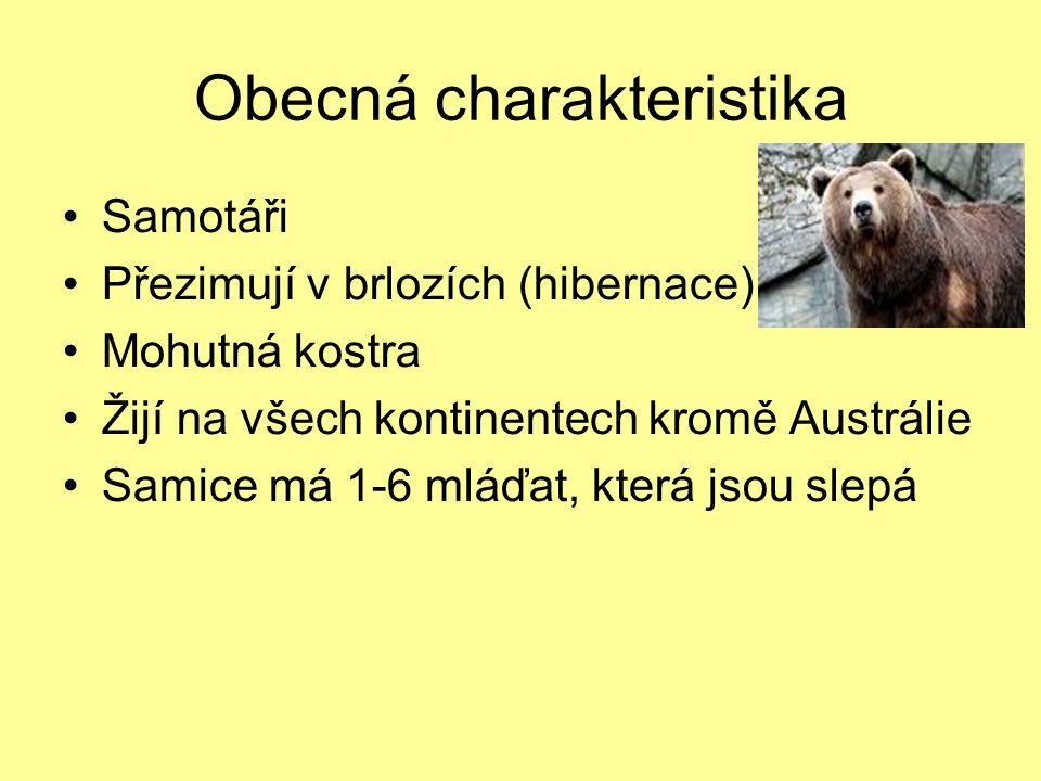 Obecná charakteristika Samotáři Přezimují v brlozích (hibernace) Mohutná kostra Žijí na všech kontinentech kromě Austrálie Samice má 1-6 mláďat, kter